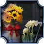 Share Florist Shop-feed