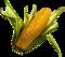 HO MTemple Corn-icon