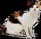 HO GeishaTeahouse Cat-icon