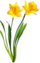 HO SecTreeh Daffodils-icon