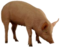 HO PBarn Pig-icon