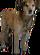 HO ProfDen Dog-icon