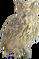 HO StillLife Owl-icon