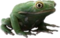 HO PBistro Frog-icon