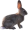 HO ConqC Rabbit-icon