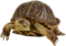 HO Checkpoint Tortoise-icon