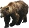 HO RFront Bear-icon
