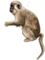 HO MBazaar Monkey-icon