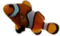 HO UWreck Clown Fish-icon