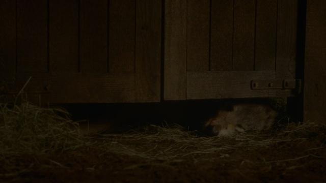 Archivo:Viento Gris asesinado HBO.jpg