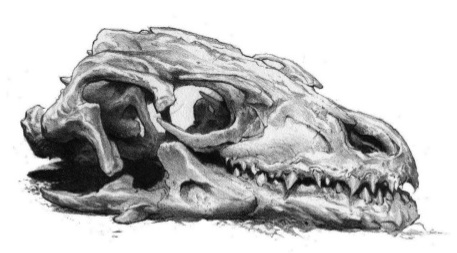Archivo:Dragon's skull by Douglas Wheatley©.jpg