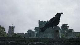 Cuervo llevando mensaje HBO