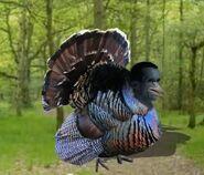 Goebbel-turkey
