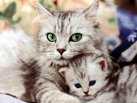 File:Cat with kitten.jpg