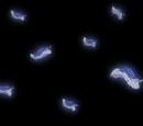 Geisterhafte Seeschnecke