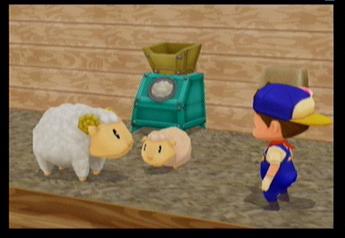 File:Sheep MM.jpg