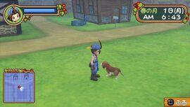 HoLV stray dog