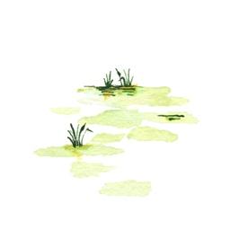 File:Swamp1 (2).jpg