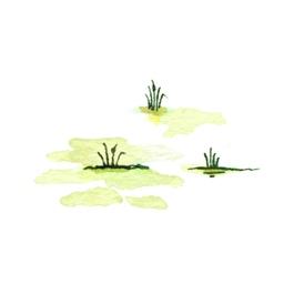 File:Swamp3 (2).jpg