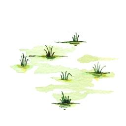 File:Swamp6 (2).jpg