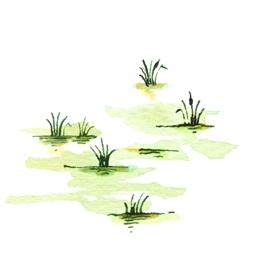 File:SwampB8 (2).jpg