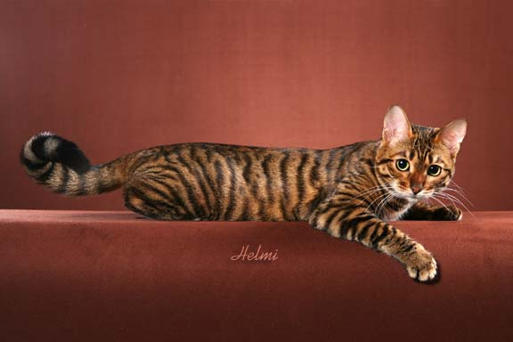 File:Tigerstripe.jpg