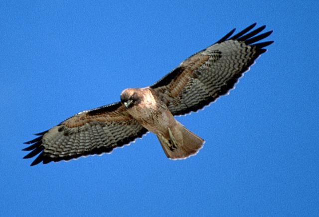 File:Skyhawk.jpg
