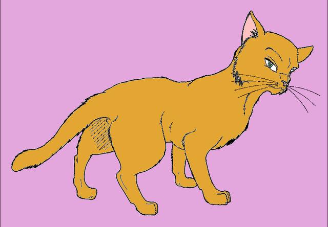 File:Browncat.png