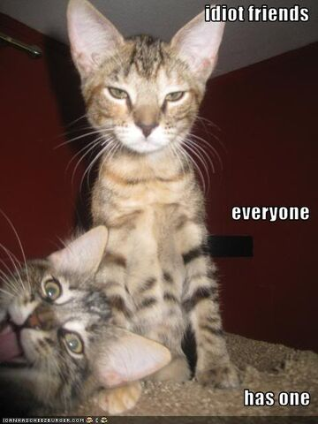File:Funny-pictures-cat-has-idiot-friend.jpg