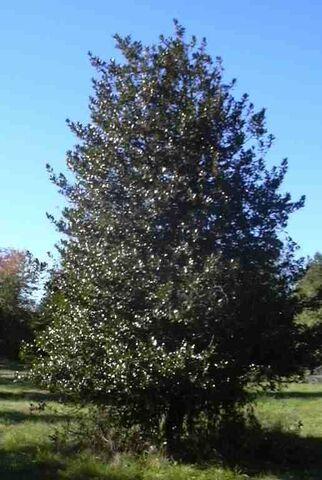 File:Earthtree.jpg
