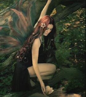 1Night Lily Fairy