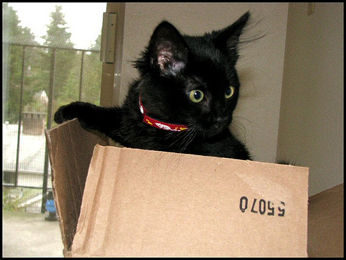File:Cat-in-box.jpg