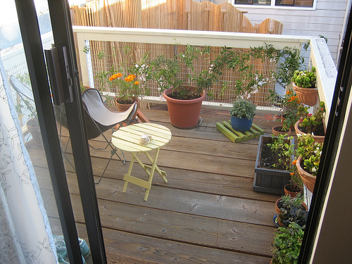 File:Sarah planted a new fall-winter garden on our deck out back.jpg