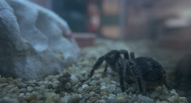 File:Spider 02.png