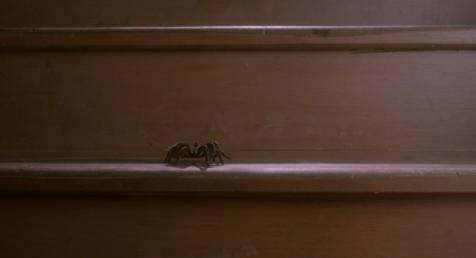 File:Spider 07.png
