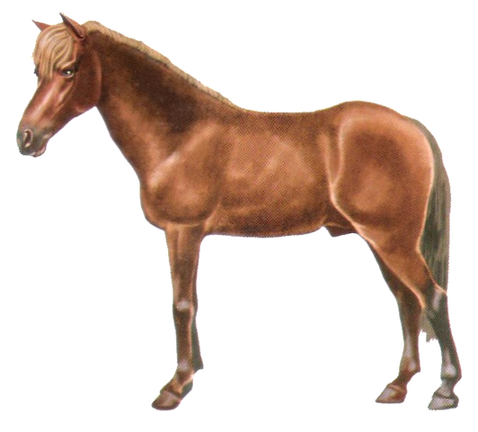 File:Java pony.png