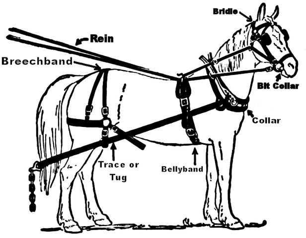 File:Illustration harness.png