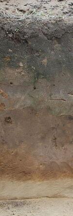 Profil glebowy