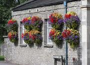 Hanging baskets in thornbury arp