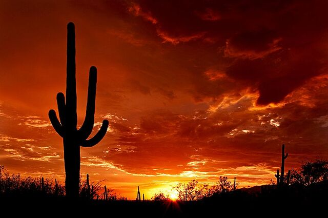 File:800px-Saguaro Sunset.jpg
