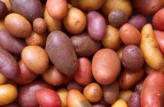 File:800px-Patates.jpg