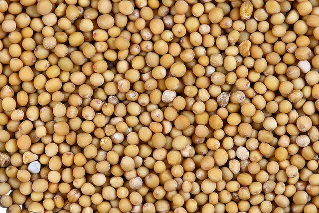 File:800px-Sa yellow mustard.jpg