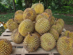 800px-Durian