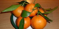 Growing Mandarin Oranges
