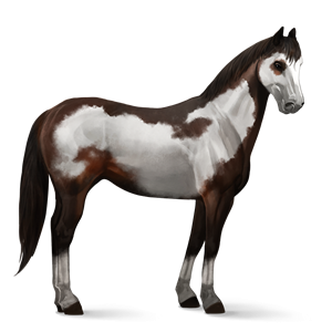 File:Paint Horse - Dark Bay Overo.png