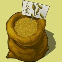 File:Graines-avoine.png