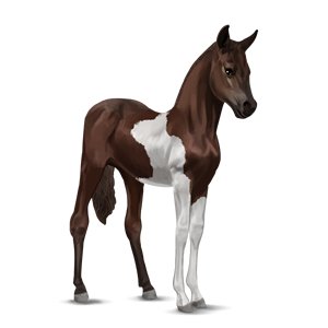 File:Paint Horse Foal - Liver Chestnut Tobiano.png
