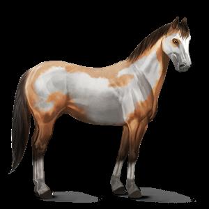 File:Paint Horse - Dun Overo.png