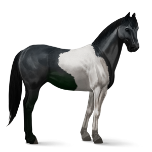 File:Paint Horse - Black Tobiano.png