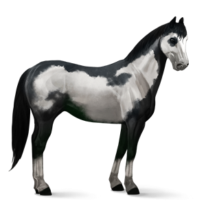 File:Paint Horse - Black Overo.png